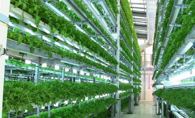 ناصر وصهيب وأحمد يؤسسون شركة لانتاج المزروعات بدون تربة