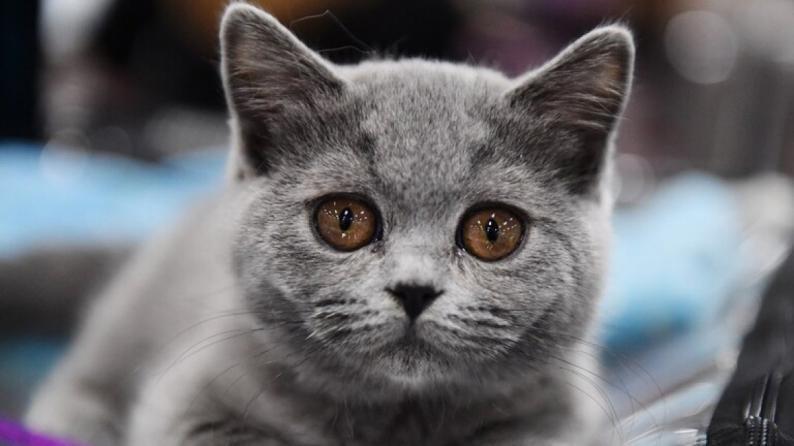 قطة بعشرين مليون روبل!!