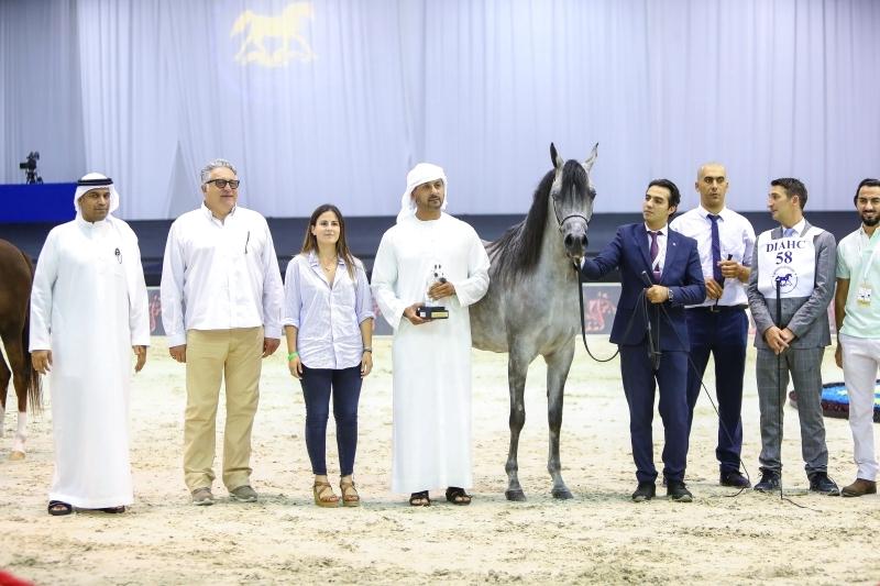 مربط دبي يتألّق في «دولية دبي للجواد العربي»