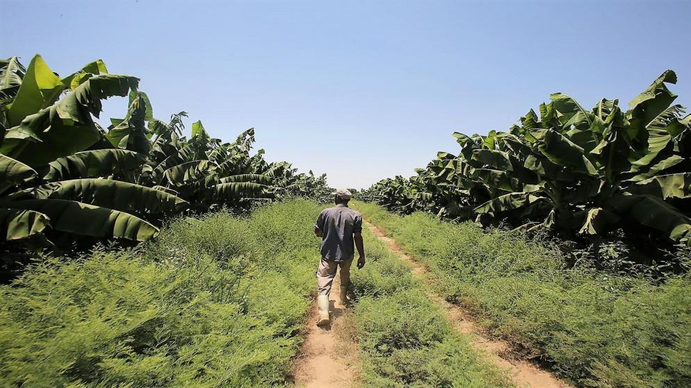 ارتفاع أسعار المنتجين الزراعيين 3.2% منذ مطلع العام