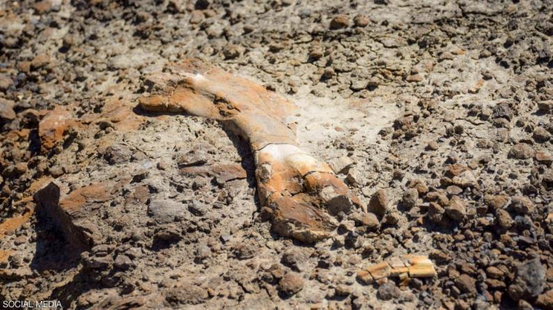 صبي يكتشف حفريات ديناصور عمره 69 مليون عاما