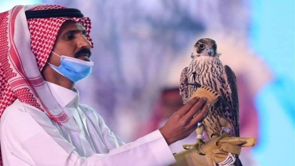 بيع صقر في مزاد بالسعودية بأكثر من 170 ألف دولار!