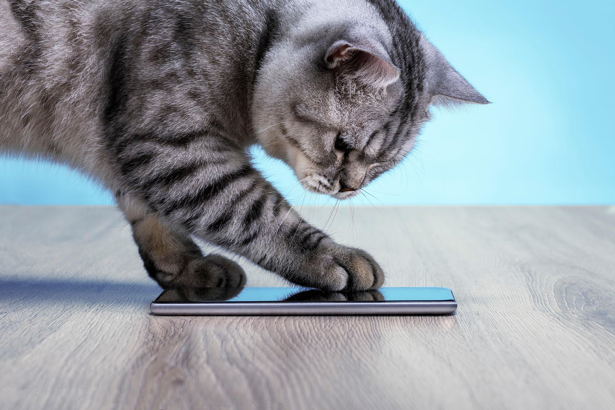 """تطبيق جديد يترجم مواء القطط.. """"احبك لا أحبك """""""