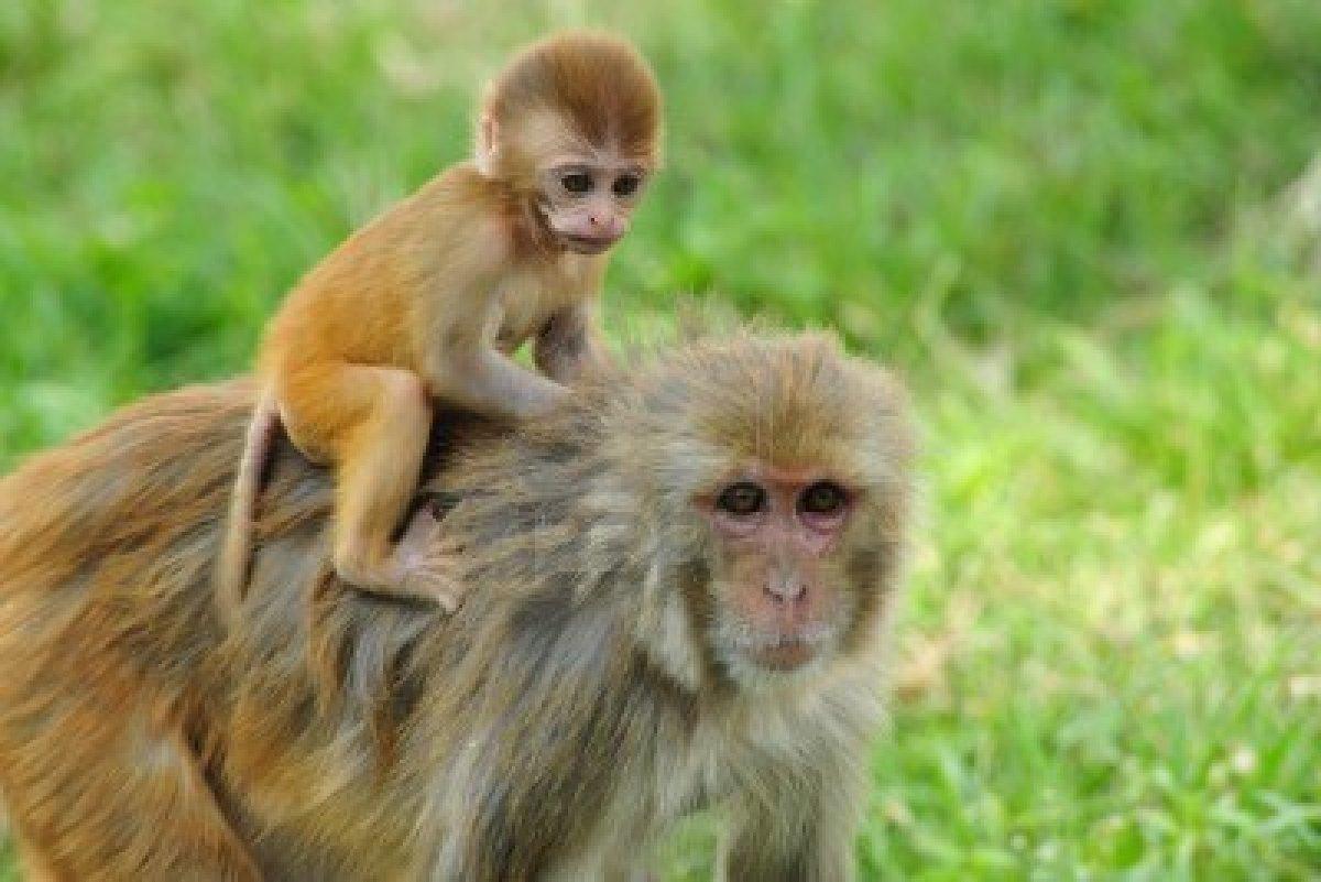 """تعرف على قصة المثل  القائل""""القرد بعين امه غزال """""""