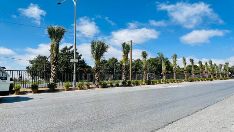 جامعة عمان الاهلية تنفذ حملة لزراعة النخيل وتأهيل طريق السرو الرئيسي احتفالا بمئوية تأسيس الدولة الاردنية