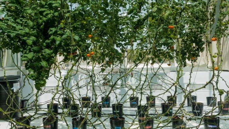 شركة مزارع البحر الأحمر السعودية الناشئة تحصل على 16 مليون دولار في أحدث جولة تمويل
