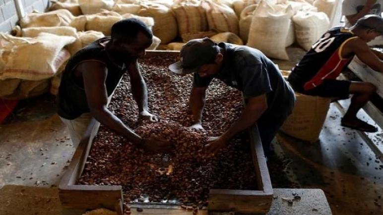 دبي واجهة جديدة لتجارة الكاكاو
