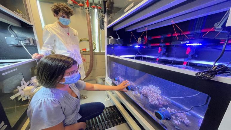 Probiotics for Corals Boost Resilience, Help Prevent Mortality